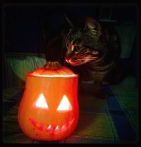 Luna y su calabaza halloweenera