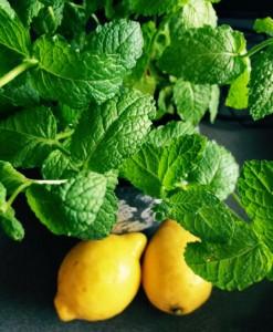 limon hierbabuena